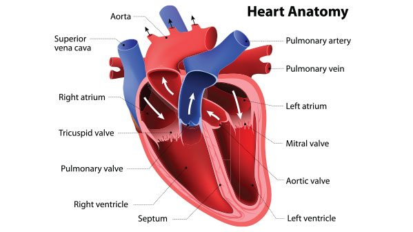 pacu jantung