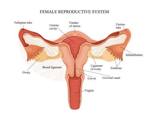 Histerektomi Vagina